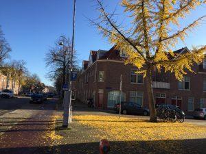 Verborgen parel tour Amsterdam met Lex and the City