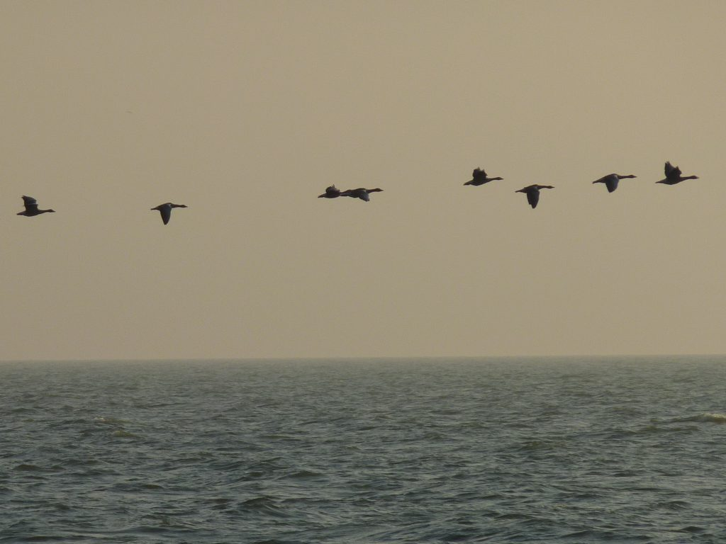 Birds on the water of Texel Island - Group trip starting from AMS - Lex and the City excursions