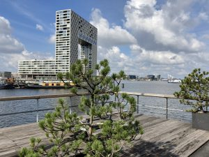 Steppen door het onbekende en hippe Amsterdam - Pontsteiger - Zouthavens - Lex and the City tours